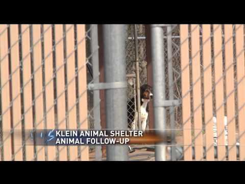 Former Klein Animal Shelter employee speaks out