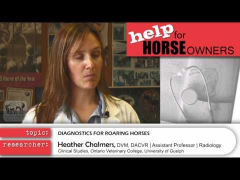 Roaring Research - Diagnostics for Roaring Horses.