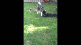Canine Balance Training Day School 'playtime'!