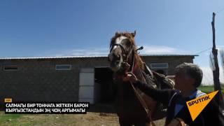 Самый дорогой конь Кыргызстана