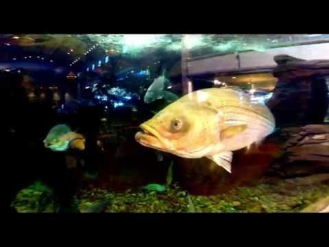 Silverton Hotel Aquarium Las Vegas