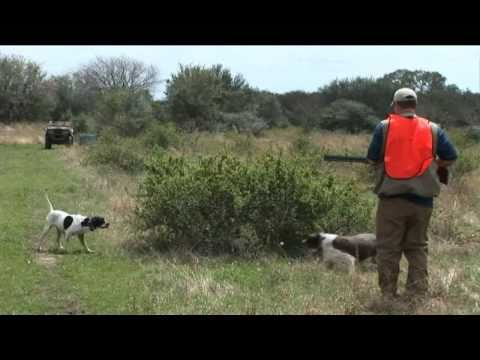 Pheasant Hunting At It's Best - Top Flight Hunting Preserve