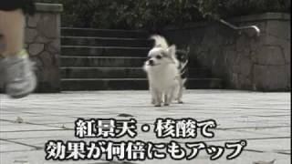 大好きな愛犬の健康と長生きのためにできることといえば・・・ http://w...
