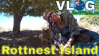 Australia \\ What To Do On Rottnest Island And Of Course Quoka's 😎 // #124