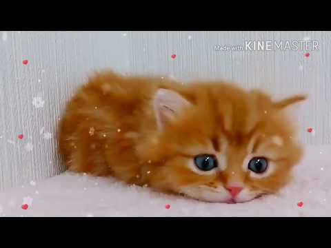 Cutness overloaded💞😻💞|super cute Whatsapp status|must watch|