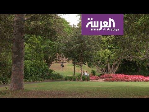 نصيحة .. قم بزيارة الحديقة النباتية الملكية في سيدني في الصباح الباكر  - نشر قبل 1 ساعة
