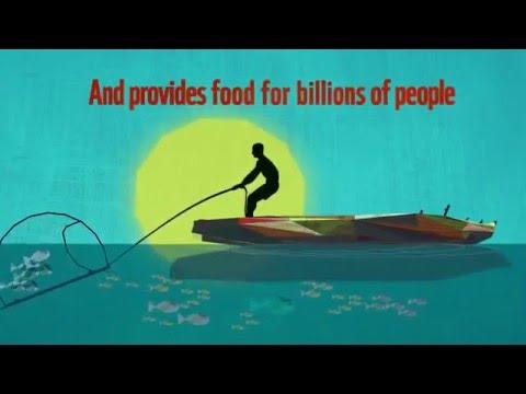 EWS WWF Marine Programme Animation (ENGLISH)