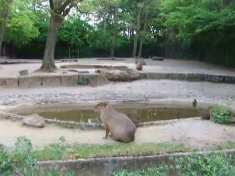 Bummel durch dem schönen  Erlebnis Zoo Hannover 2013