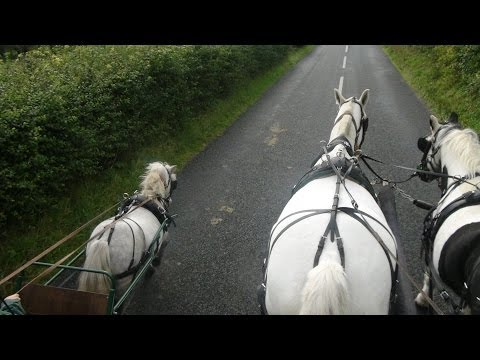 Carriage driving in company - training a pair of horses and a shetland.
