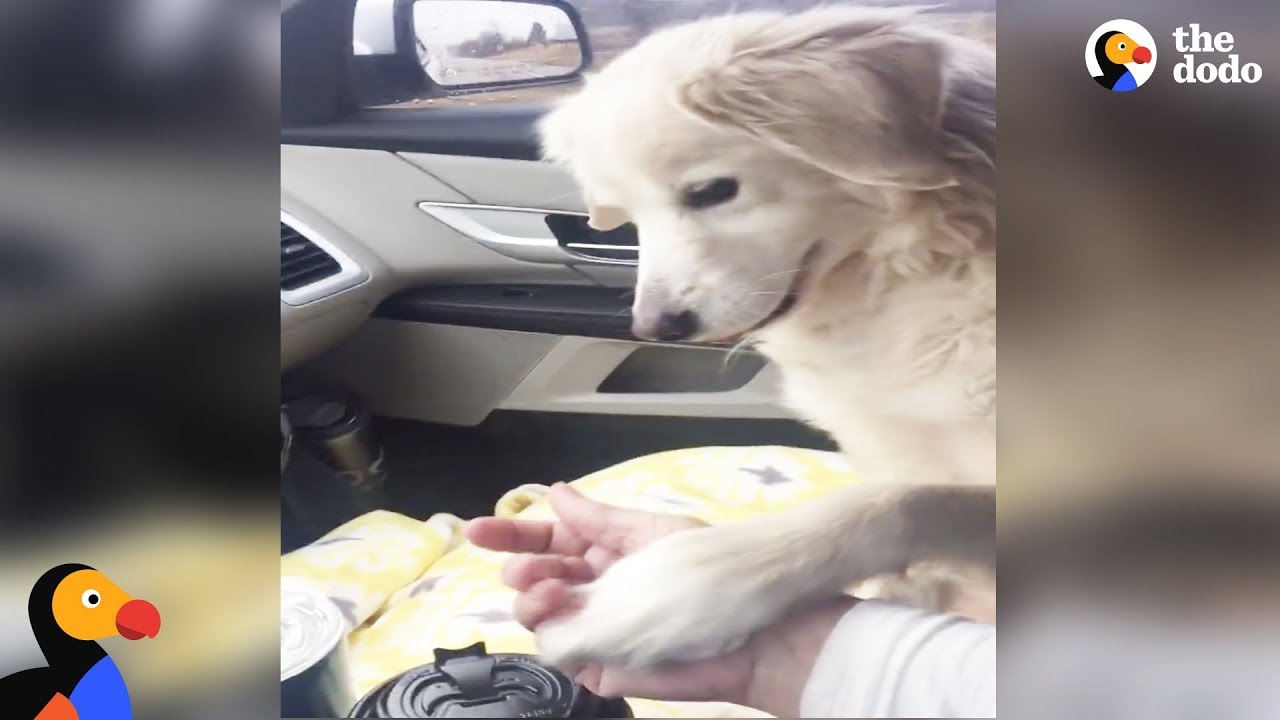 Shelter Dog Holds Foster Mom's Hand the Entire Ride Home
