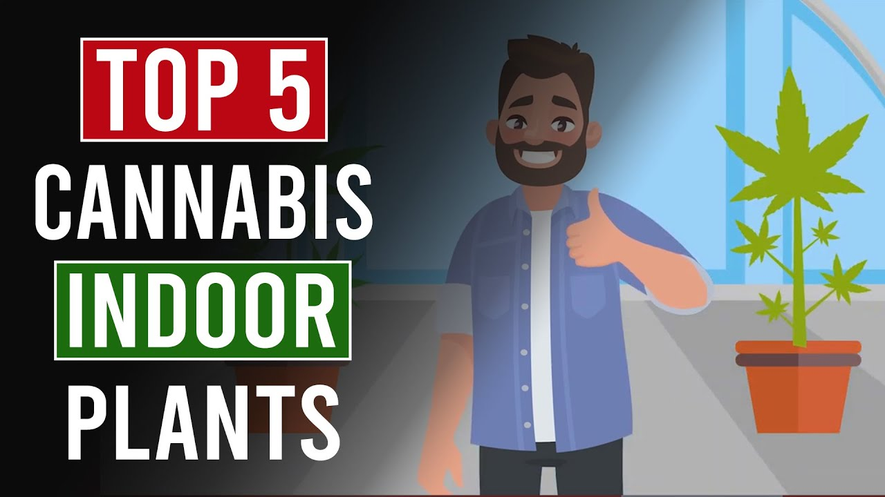 The Top 5 Indoor Cannabis Plants for 2020