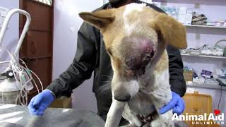 Please make a donation to help rescue street animals in India : htt...