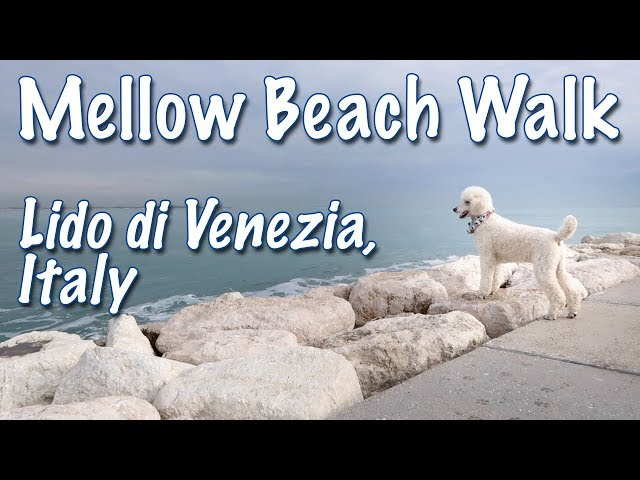 Mellow Walk on Dog Friendly Lido di Venezia