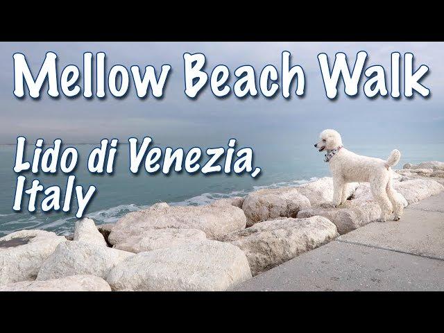 Mellow Walk on Dog Friendly Lido di Venezia