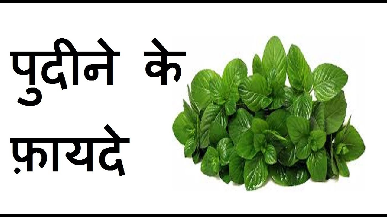 pudina leaves in english