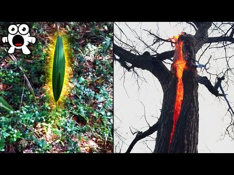 Strange Mysteries Discovered In the Woods
