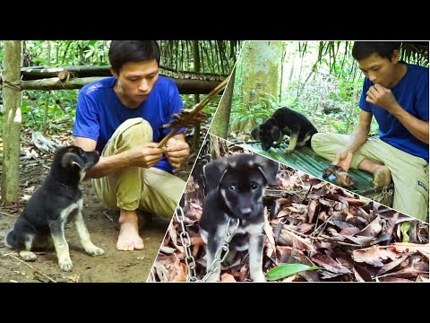 Jungle Survival Challenge