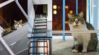 Кот на чердаке ждет хозяина, Минск, 05.11.2014