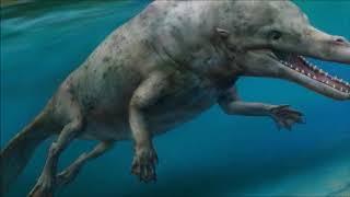 Evolución del delfín