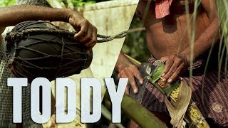 How they Collect Toddy from Coconut Tree? Toddy Tapping Video Video