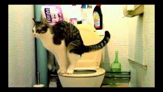 mon chat va aux toilettes et tire la chasse d