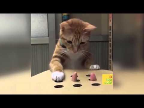 Lustige Katzen 2015 June (#65)