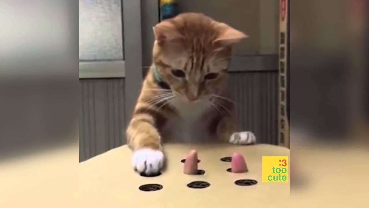 Wochenende Spruche Spruchbild Mude Katze Spruche Suche