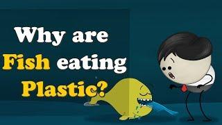 Why are Fish eating Plastic? | #aumsum #kids #fish #plasticpollution #plastic
