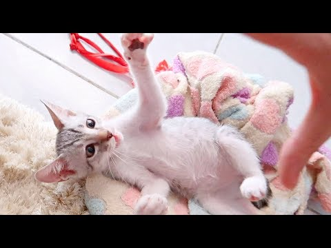 ✰Do Kittens/Cats Relieve HUMAN STRESS? Watch & FIND OUT! 🐈