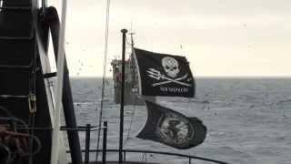 Bob Barker Intercepts the Thunder in the Southern Ocean