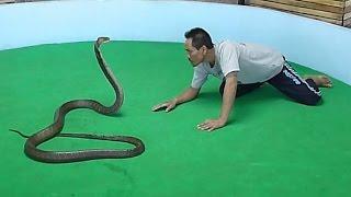 Шоу со змеями. Таиланд, Пхукет. Snake show. Thailand, Phuket