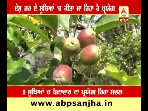 Now Apples Can Grown In Hot Areas Also Bilaspur Famers Make It Possible