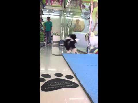 Pets Habitat LLC, Barsha, Dubai