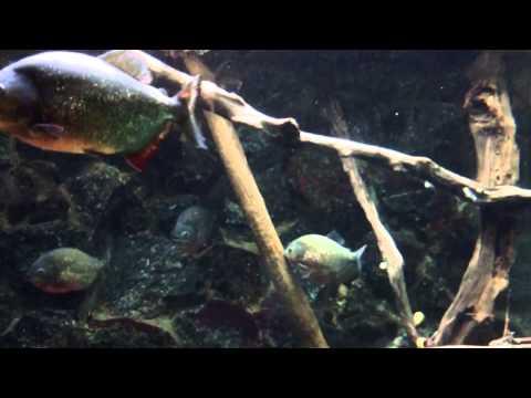 Aquarium Bij Dierenpark Artis in Amsterdam - POWERED bY iLICoM.NL ®