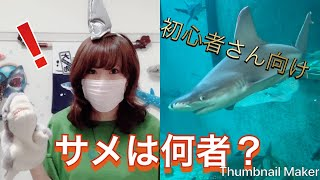 【サメの分類】サメは一体何者なのか thumbnail