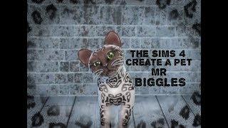 The Sims 4 | Create a Pet | Mr Biggles The Siamese Kitten