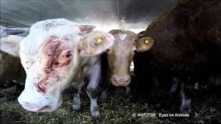 Enquête - Exportation d'animaux vers la Turquie