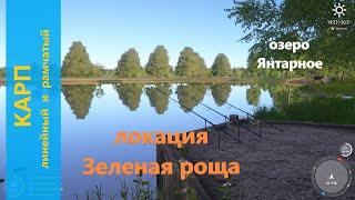 Русская рыбалка 4 озеро Янтарное Карп линейный и рамчатый