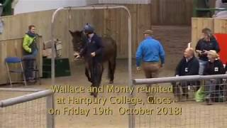 Wallace and Monty reunited at Hartpury College, Glocs on Friday 19th  October 2018