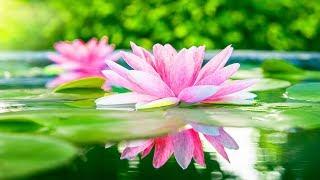 Relaxing Music, Meditation, Reiki Music, Calm Music, Healing, Sleep Music, Study, Sleep, Spa,☯1990