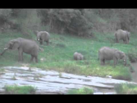 The Masai Mara (July 2011)