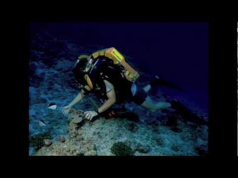 Richard Pyle: Exploring the reef's Twilight Zone