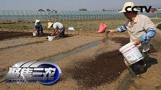 《聚焦三农》 20190504 社会化服务如何服务小农户| CCTV农业