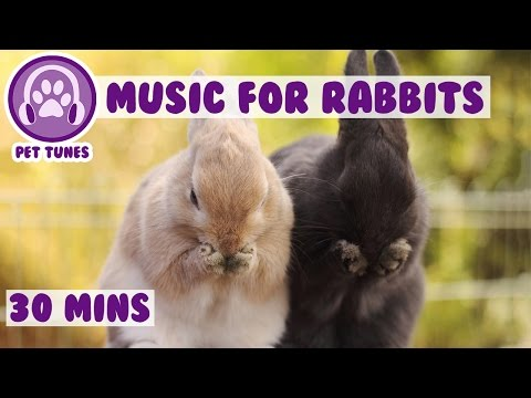 Music for Rabbits! Relaxing and Soothing Music for bunny Rabbits!
