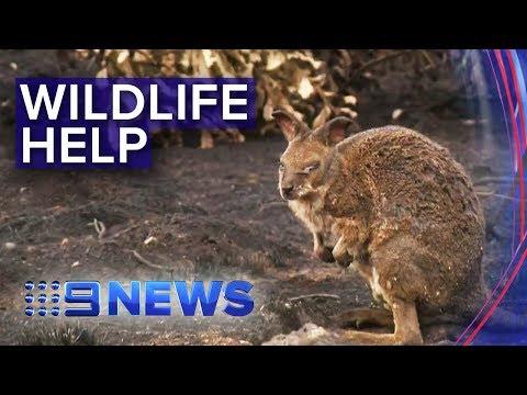 Bushfire death toll for Australian wildlife rising | Nine News Australia