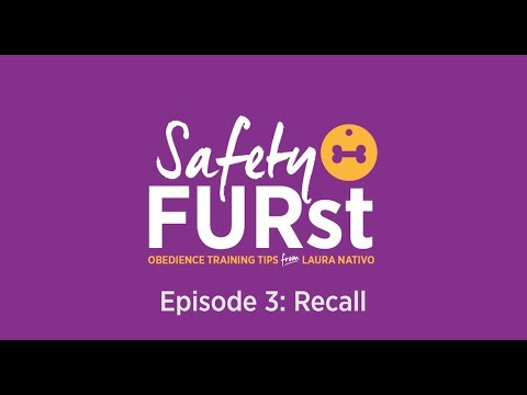 How to Train a Dog to Come When Called - Safety FURst by Embrace Pet Insurance