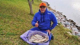 Сазан, карась и подлещик на фидер. Осенняя рыбалка на реке Самара, Днепр.