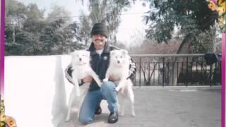 In dino dil mera    Life in a metro   Col Pendyala Pradeep