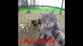 Like a Boss!  Подборка самых серьёзных лайк е босс!!!