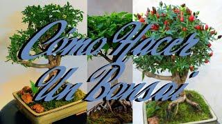 Cómo Hacer un Bonsai bien explicado (Bonchi) | Huerto Urbano Villarreal